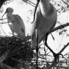Kuş Cenneti
