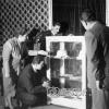 Atatürk'ten Hatıralar Sergisinden, 1954